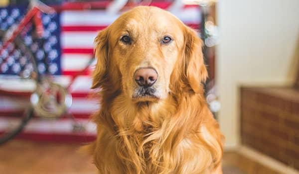 Requisitos para adoptar un perro en Estados Unidos