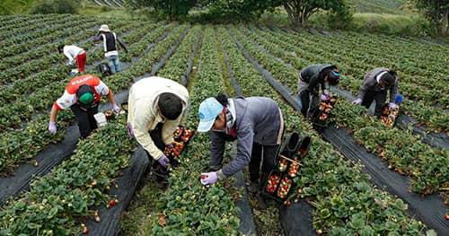 Requisitos para cobrar la renta agraria en España 2