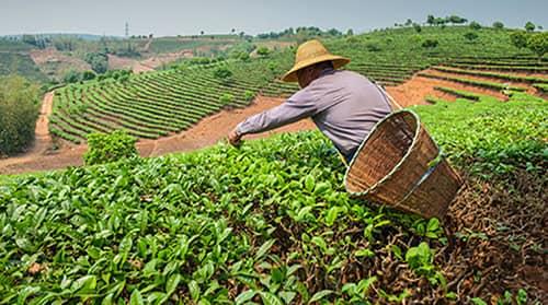 Requisitos para cobrar la renta agraria en España 3