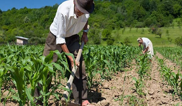 Requisitos para cobrar la renta agraria en España
